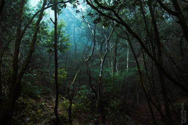 Bay forest  Tenerife by Kluschi