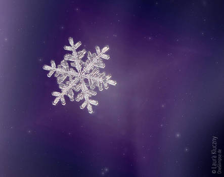 Collection: Snowflakes on coloured background