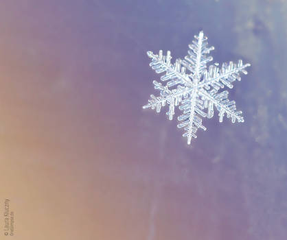 Collection: Snowflakes on coloured backgrounds