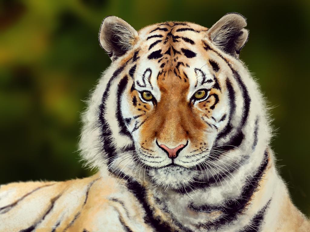 Tiger by Skellagirl
