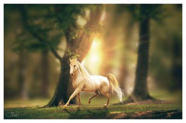 foresta luce by Veradaine