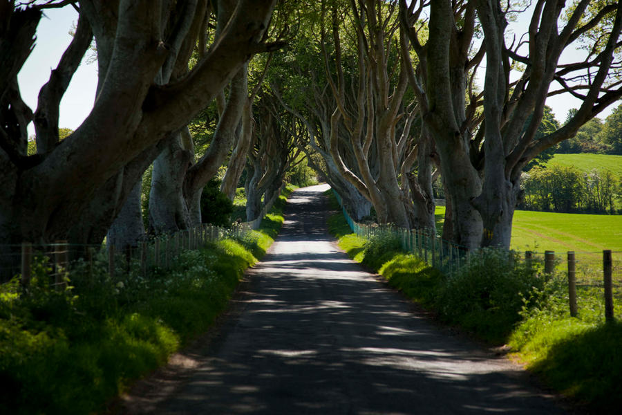 The dark hedges 1 by magikstock