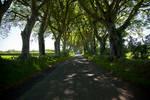 The dark hedges 3