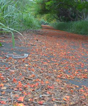Orange Petal Path
