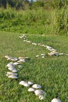 Mushroom Path by cartoonistforchrist