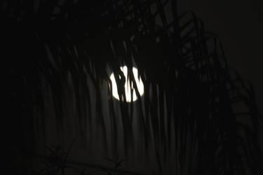 Fronds Moon