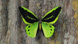 Green birdwing butterfly 3D model