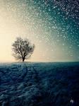 The Nowhere Tree