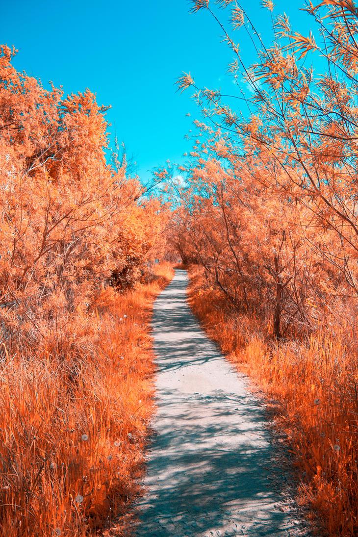 Infrared Nature by MBHenriksen