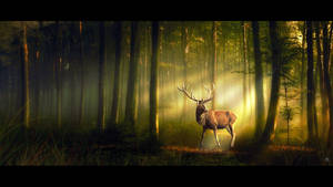 The Woodland King by MBHenriksen