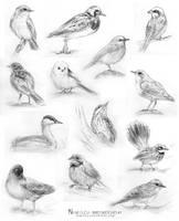 Bird Sketches #1 by Nimiszu