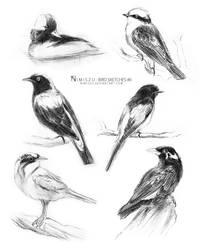 Bird Sketches #6 by Nimiszu