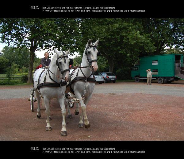 Wedding chariot 8