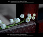 Lily of the valley 5