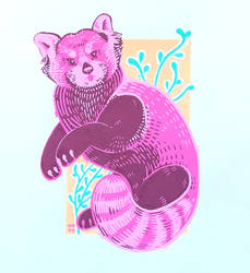 red panda by softwest
