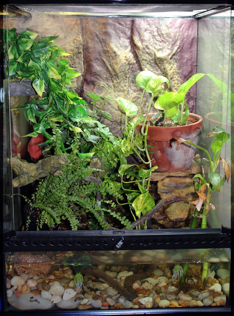 Crocodile skink cage setup - photo#5