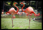 Fancy Flamingo Fluff