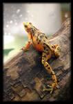 Panamanian Golden Frog Leg