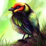 Bird Practice Layer Paint