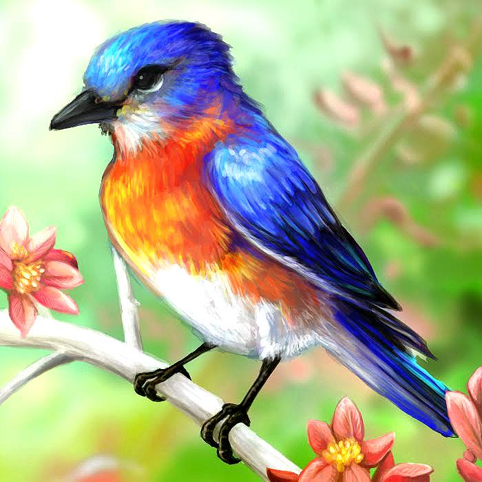 Blue Bird Layer Paint
