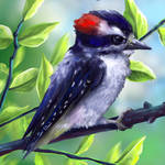 Layer Paint Downy Woodpecker