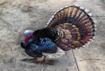 3D Turkey Chalk Art