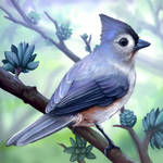 Layer Paint Tufted Titmouse