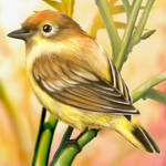 Layer Paint Palm warbler Breeding male