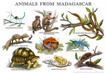 Animals from Madagascar