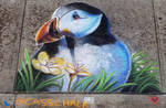 North Atlantic Puffin Chalk Art