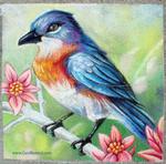 Bluebird Chalkart