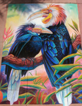 Wreathed Hornbills Chalkart