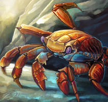 Sally Lightfoot Crab Adam