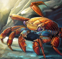 Sally Lightfoot Crab Adam by charfade
