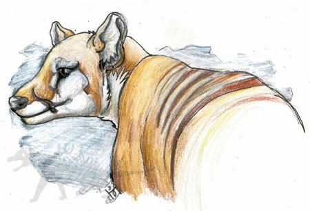 Tasmanian tiger by Eefnar