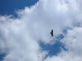 Bird in the Sky 1