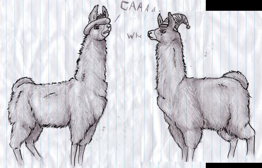 llamas in hats. llamas in hats.