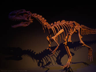 Bones by Trish-the-Stalker
