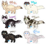 Cat Adoptable Sheet [ CLOSED]