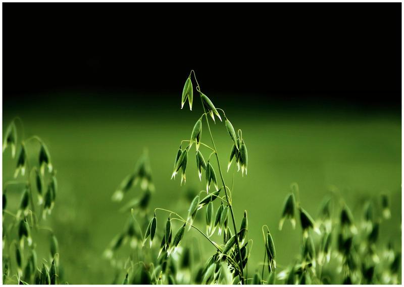 green moment