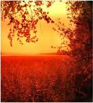 red and orange by KariLiimatainen