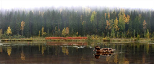 autumn feeling .. IV by KariLiimatainen