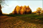autumn colours  xx