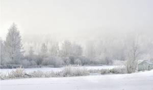 white winter ..