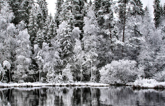 white winter .  ... ..