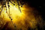 Let The Sunshine In II by KariLiimatainen