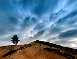 i like trees .. , by KariLiimatainen