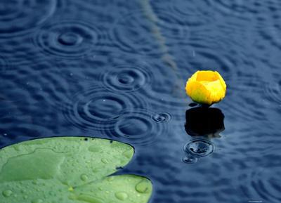 summer rain .. by KariLiimatainen