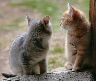 kittens . .. by KariLiimatainen
