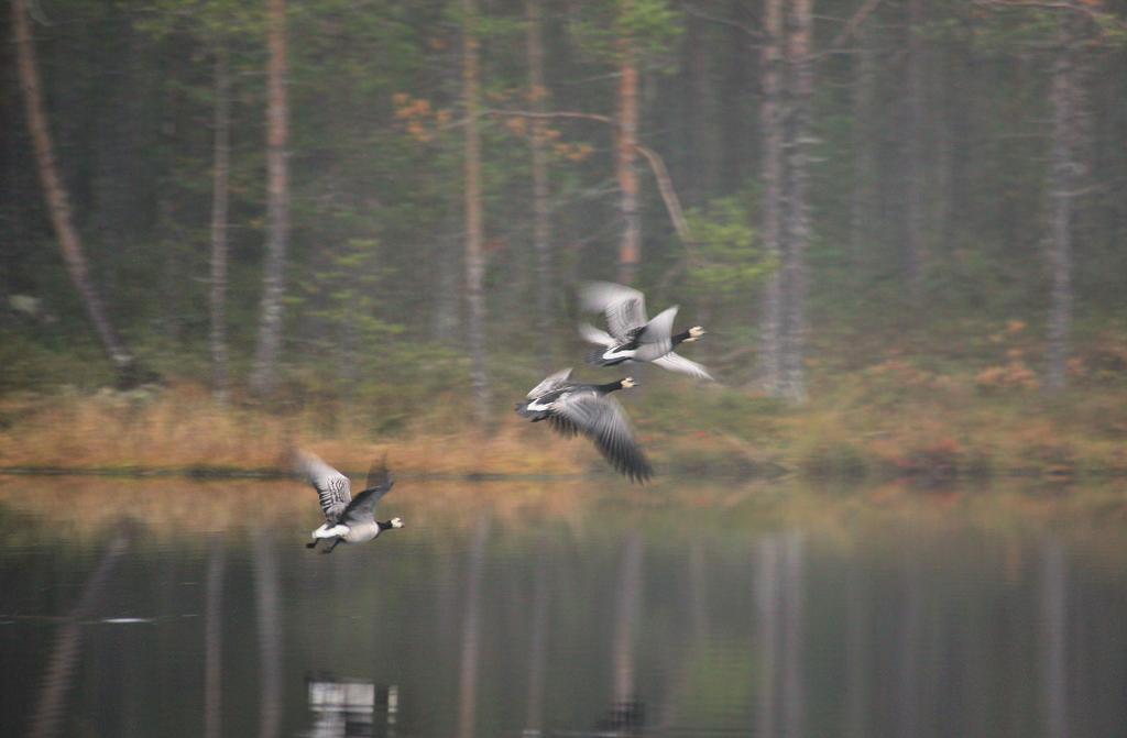 fly by KariLiimatainen